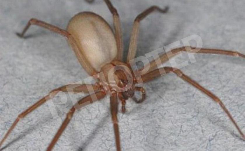 Из-за укуса паука мужчине на Днепропетровщине ампутировали обе ноги