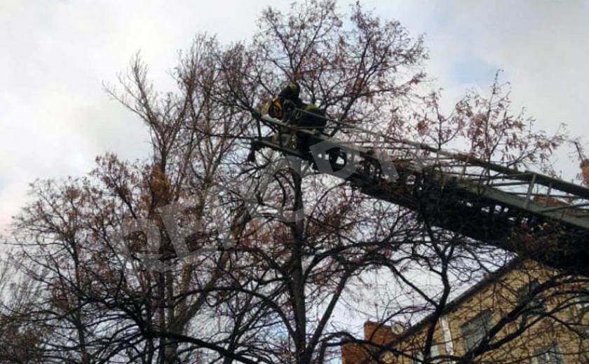 Трое никопольских пожарных не дали погибнуть птице
