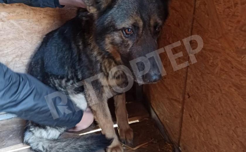 В Никополе нелюди оставили собаку на цепи на отшибе