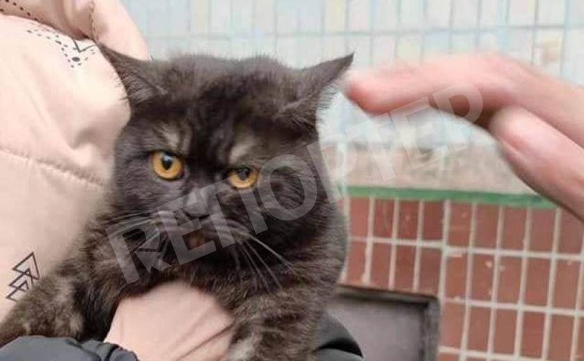 Никопольский кот отделался легким испугом