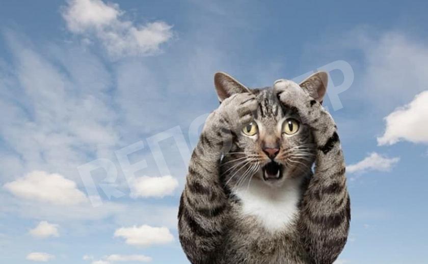 Покровский кот попал в передрягу